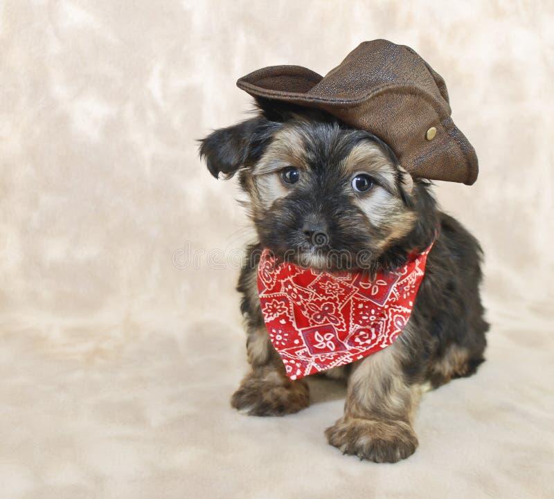 Filhote de cachorro do cowboy imagens de stock royalty free