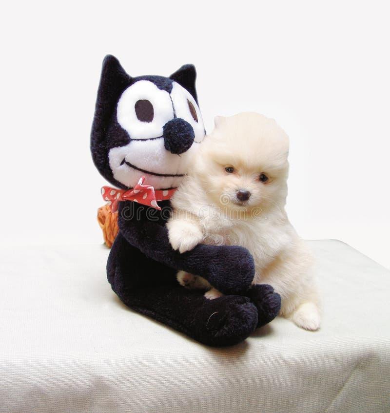 Filhote de cachorro do frise de Bichon imagem de stock royalty free