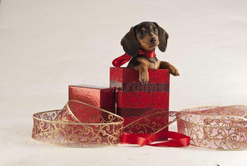 Filhote de cachorro do Natal fotos de stock royalty free