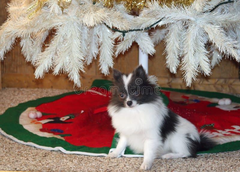 Filhote de cachorro do presente do Natal fotos de stock
