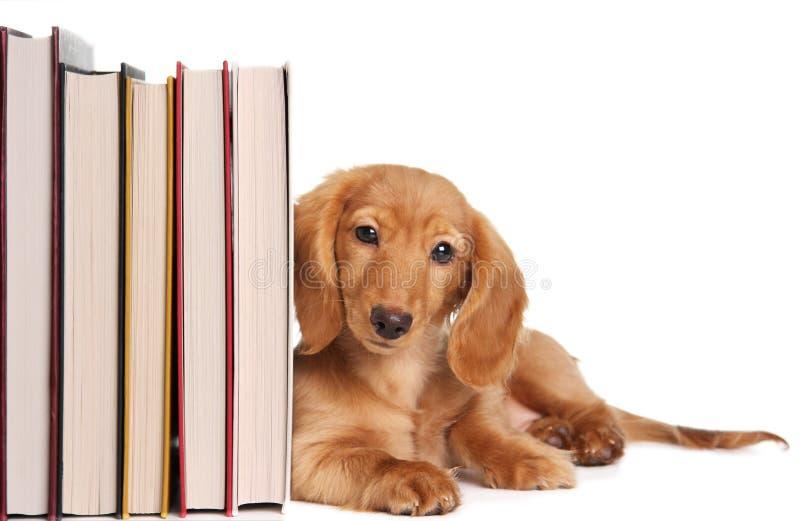 Filhote de cachorro do suporte para livros foto de stock royalty free