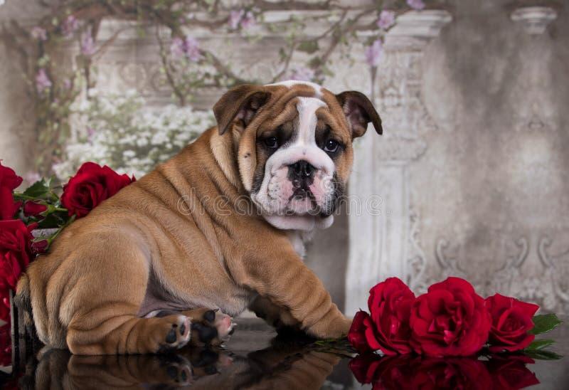 Filhote de cachorro e flores imagens de stock