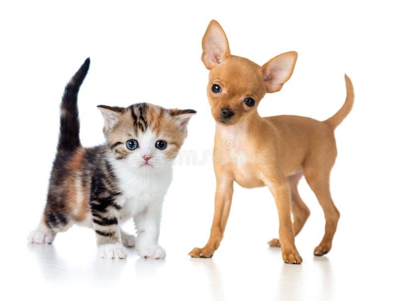 Filhote de cachorro e gatinho fotografia de stock royalty free
