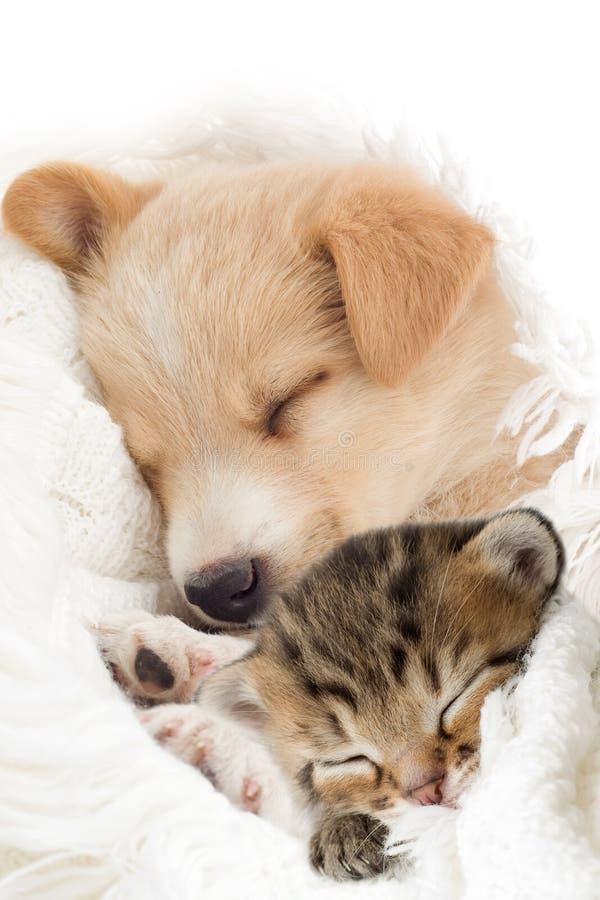 Filhote de cachorro e gatinho foto de stock