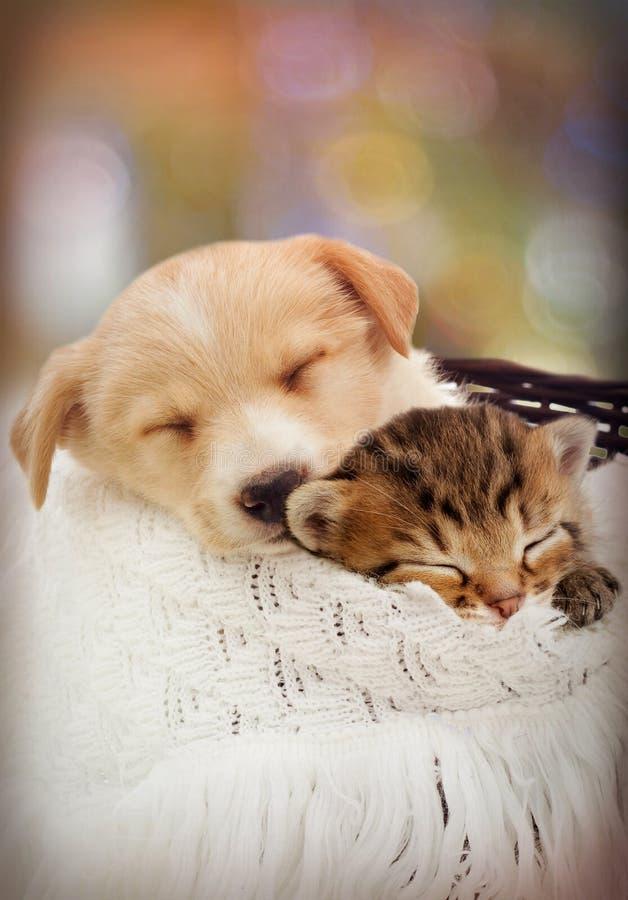 Filhote de cachorro e gatinho fotografia de stock