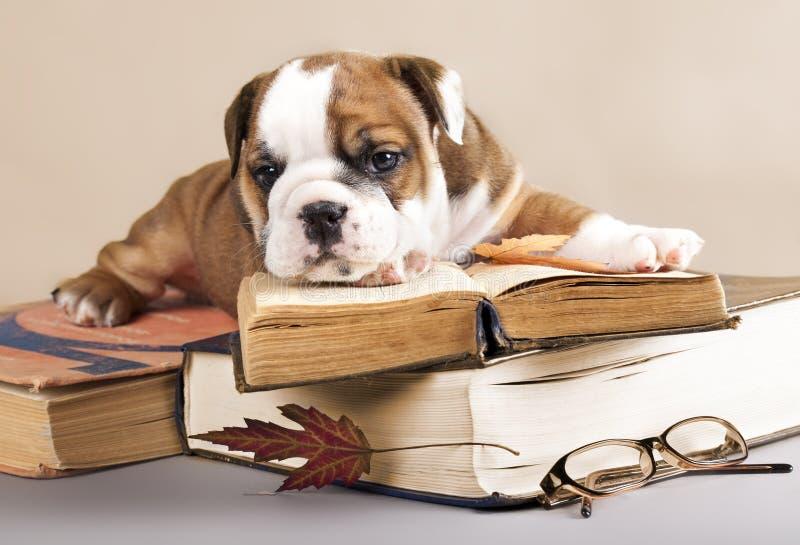 Filhote de cachorro e livro do puro-sangue fotografia de stock royalty free