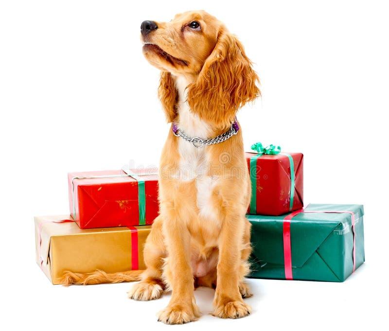 Filhote de cachorro e presentes imagens de stock royalty free