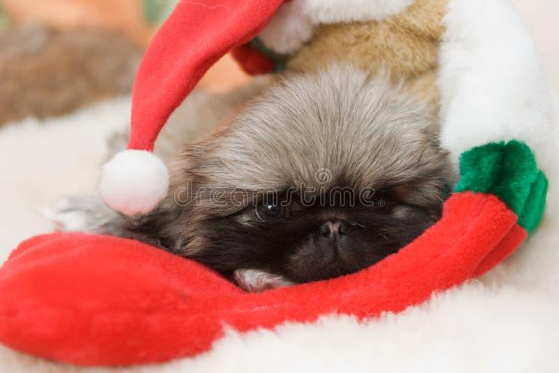 Filhote de cachorro em um chapéu de Santa imagem de stock