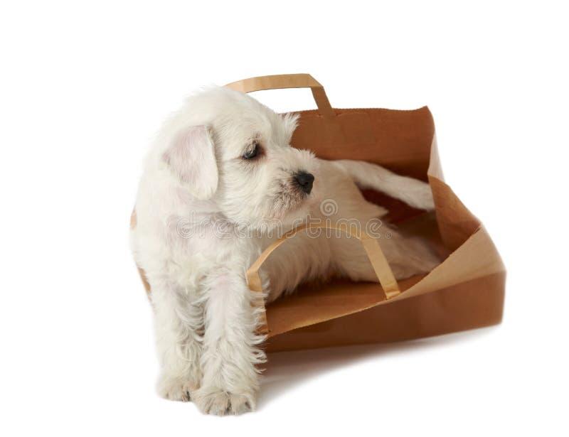 Filhote de cachorro em um saco de compra fotos de stock royalty free