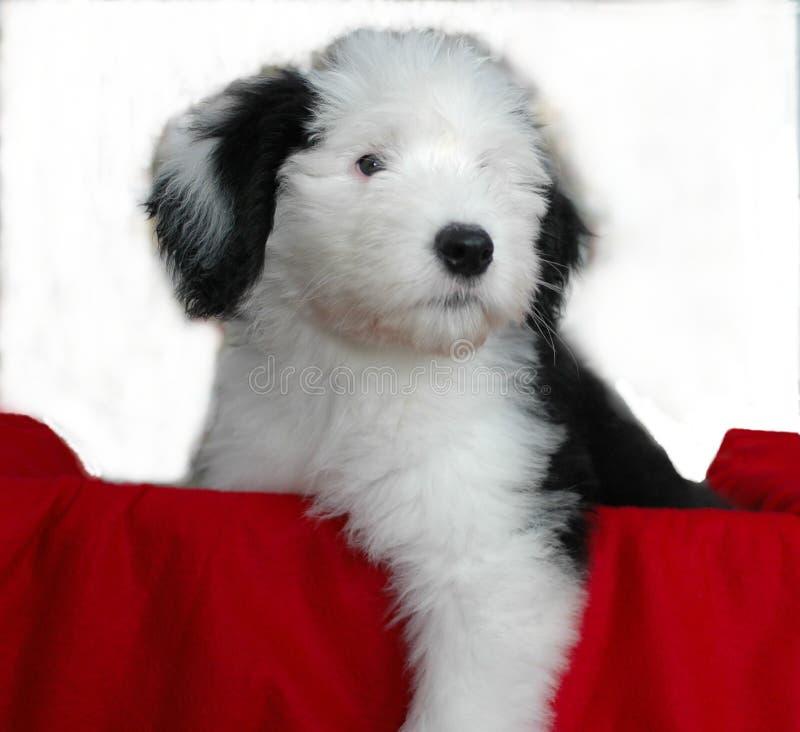Filhote de cachorro em um tronco imagens de stock