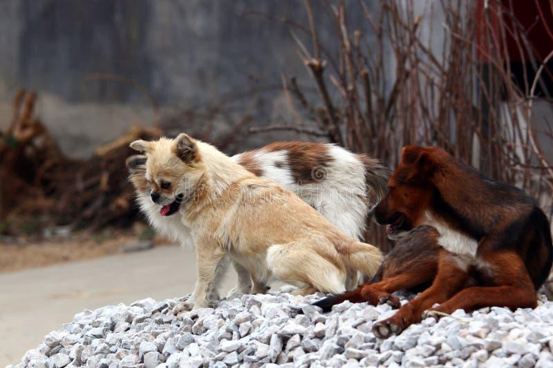 Filhote de cachorro encantador imagem de stock royalty free
