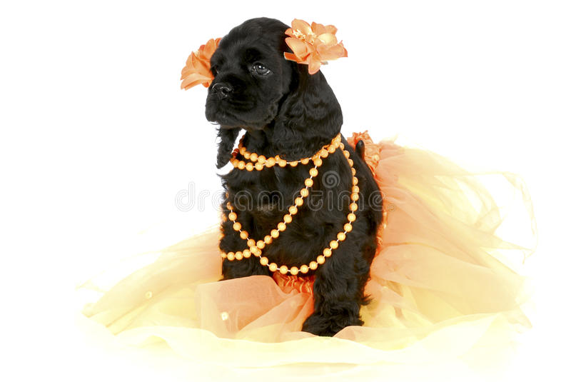 Filhote de cachorro fêmea bonito fotos de stock royalty free