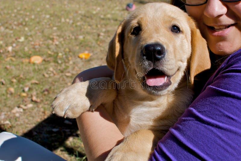 Filhote de cachorro feliz nos braços de mulher nova fotografia de stock