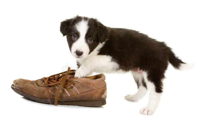 Filhote de cachorro impertinente travado fotografia de stock royalty free