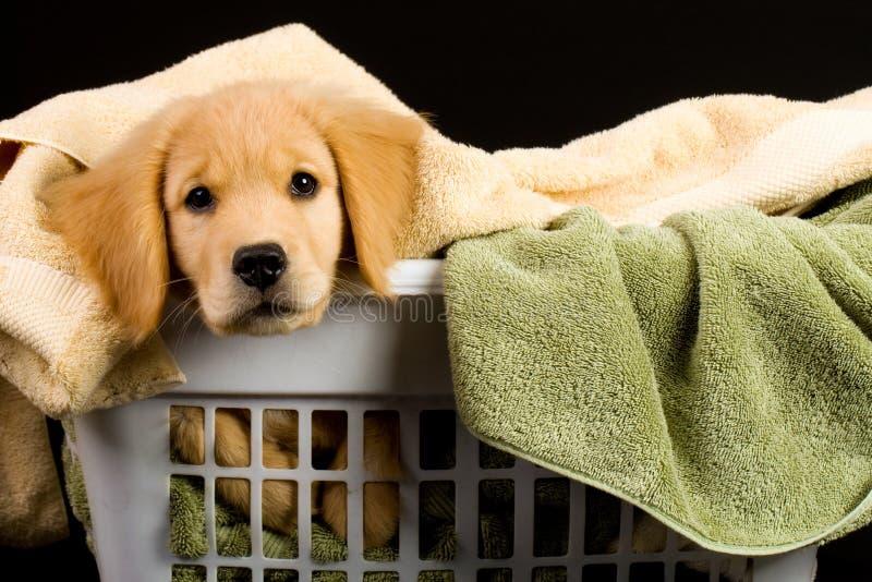 Filhote de cachorro macio fotografia de stock