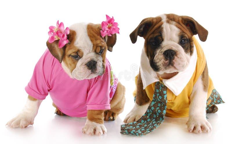 Filhote de cachorro masculino e fêmea foto de stock