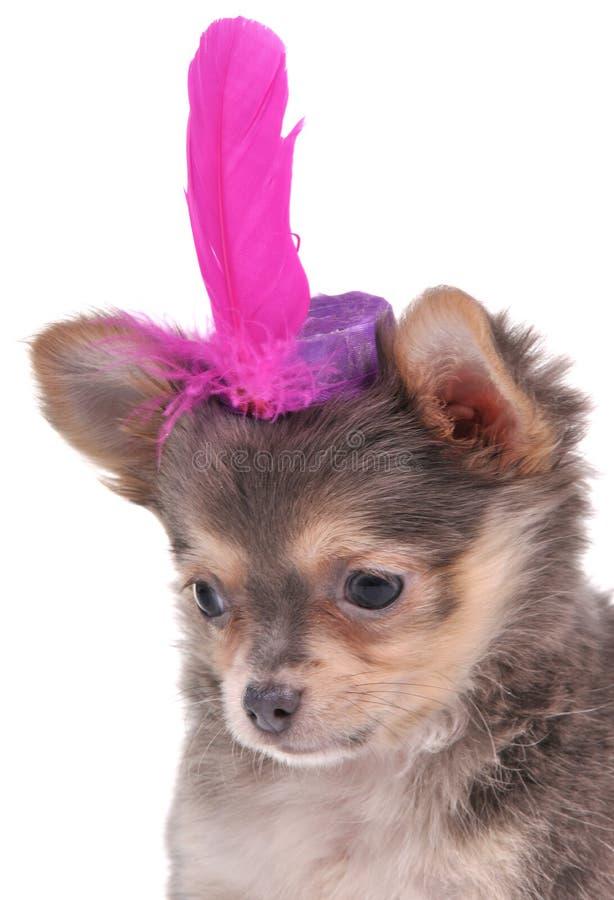 Filhote de cachorro minúsculo que desgasta um chapéu engraçado imagem de stock