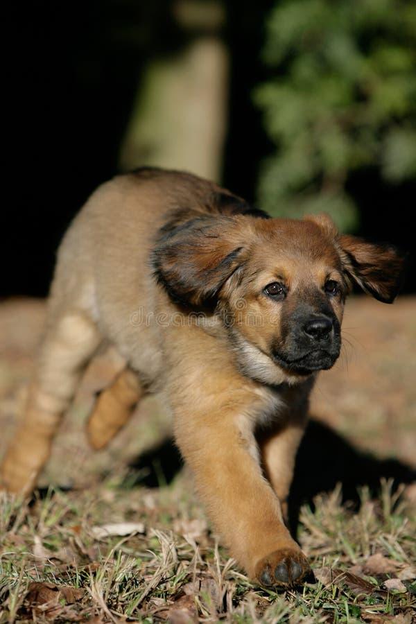 Filhote de cachorro na ação imagens de stock