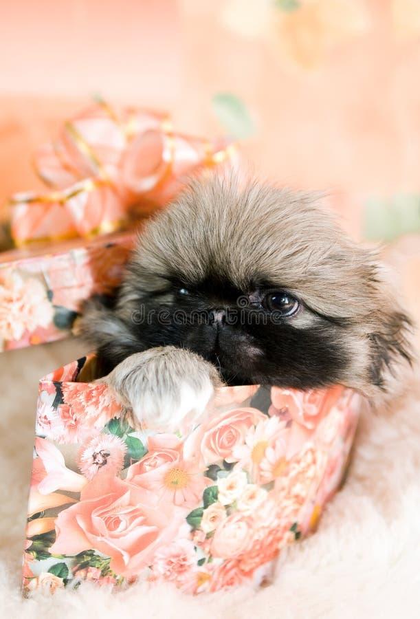 Filhote de cachorro na caixa imagens de stock royalty free