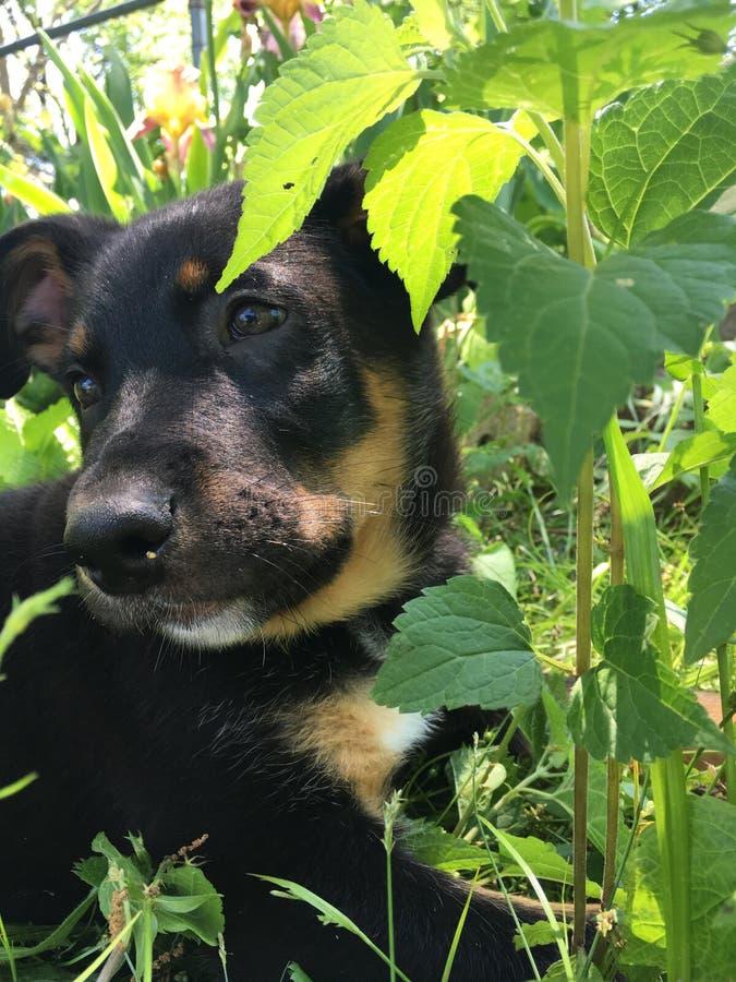 Filhote de cachorro na grama foto de stock royalty free