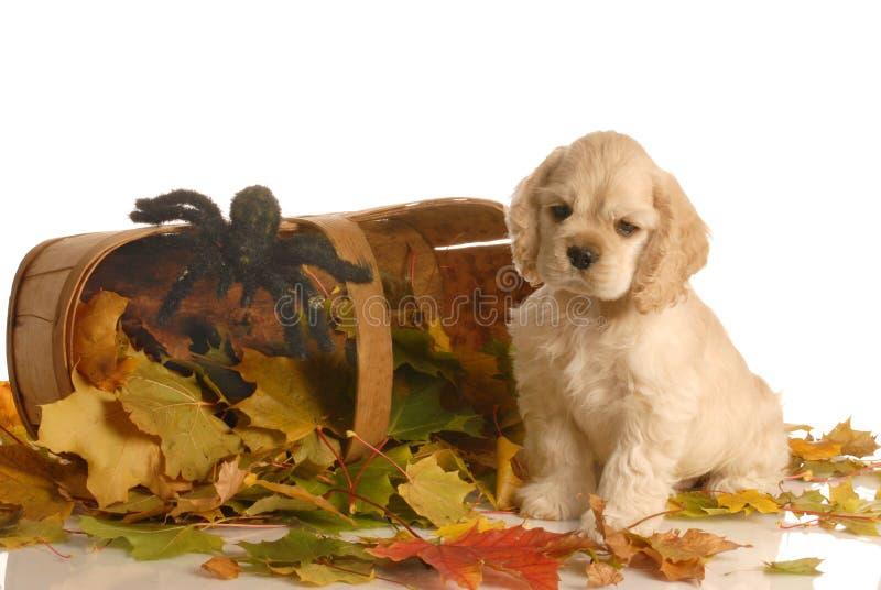 Filhote de cachorro no ajuste do outono imagem de stock royalty free