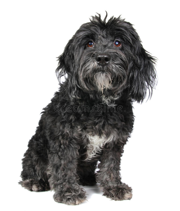 Filhote de cachorro no branco imagens de stock royalty free