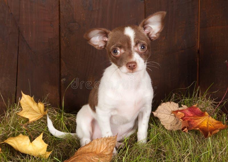 Filhote de cachorro no outono imagem de stock