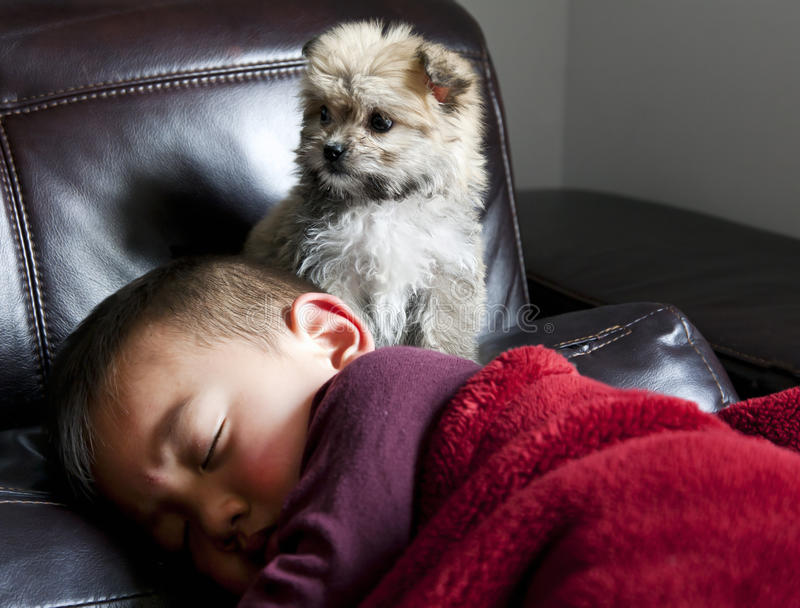 Filhote de cachorro observador e menino foto de stock