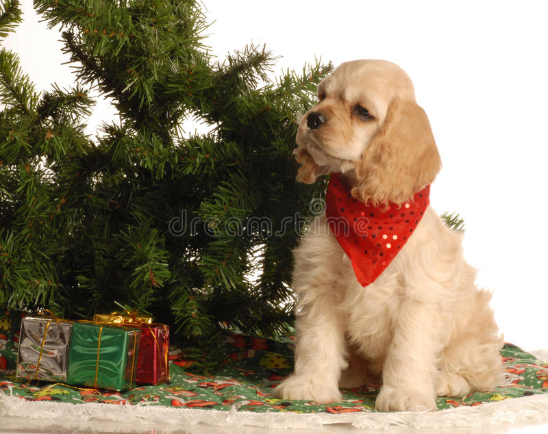 Filhote de cachorro para o Natal imagem de stock royalty free