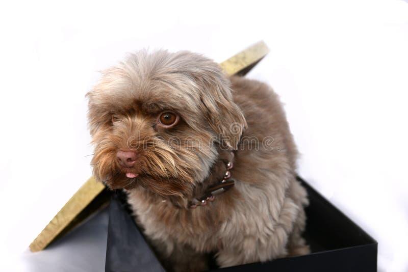 Filhote de cachorro para o presente imagens de stock