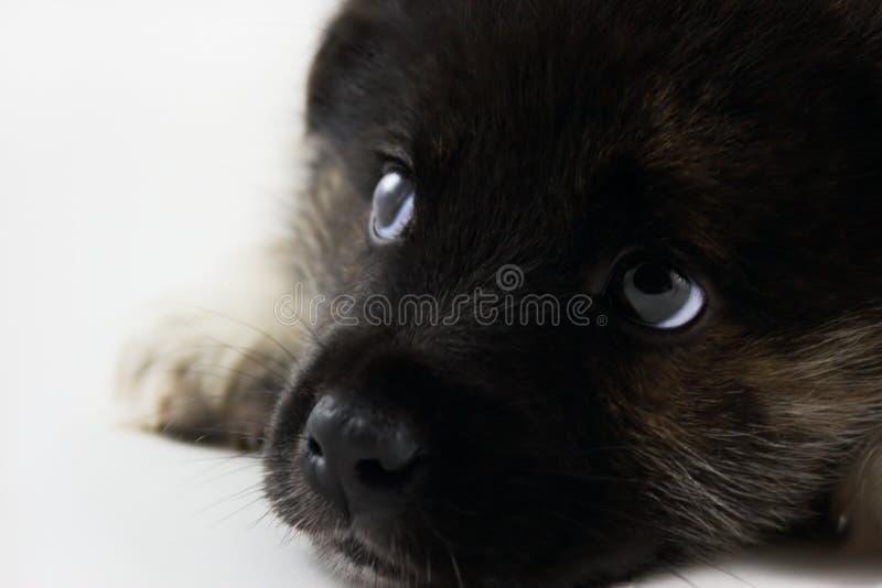 Filhote de cachorro pensativo imagens de stock royalty free