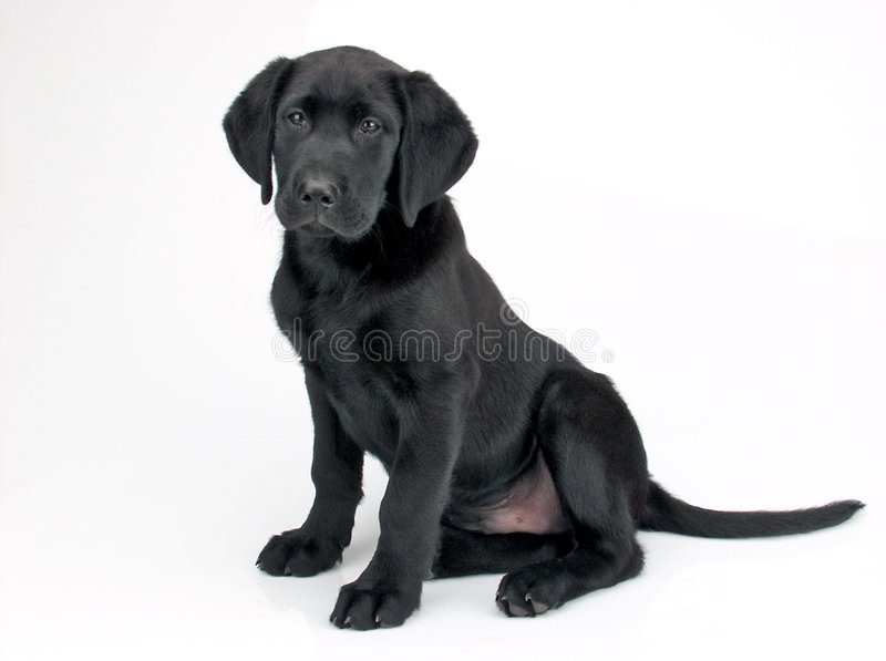 Filhote de cachorro pequeno fotografia de stock