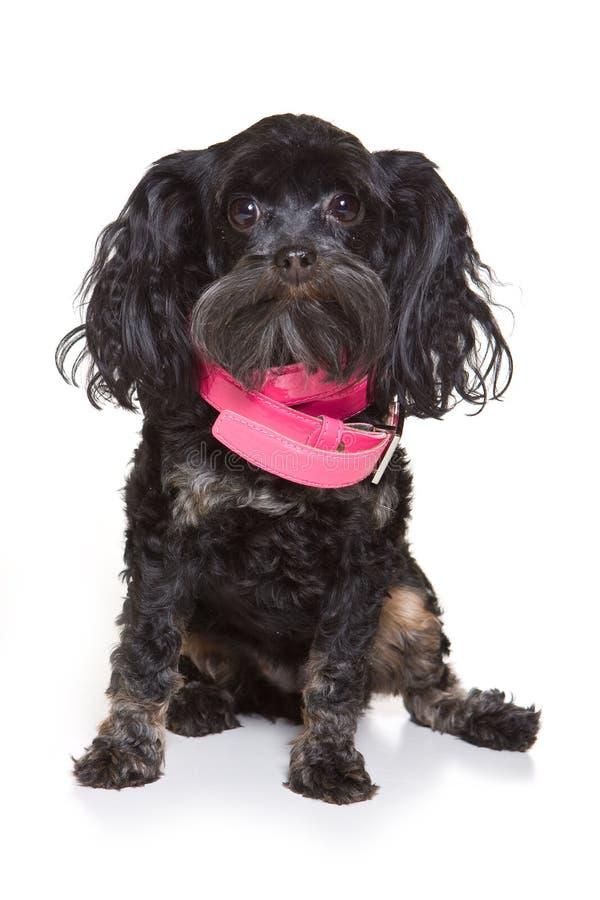 Filhote de cachorro preto imagem de stock