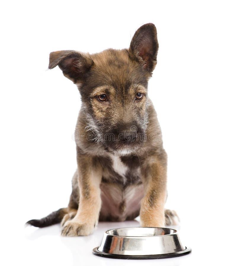 Filhote de cachorro que implora pelo alimento Isolado no fundo branco imagens de stock royalty free