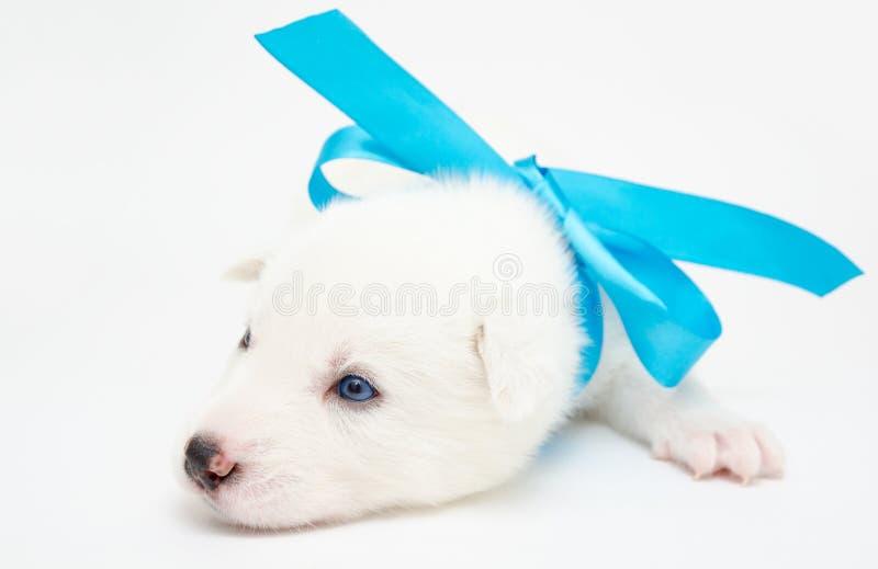 Filhote de cachorro ronco fotos de stock royalty free