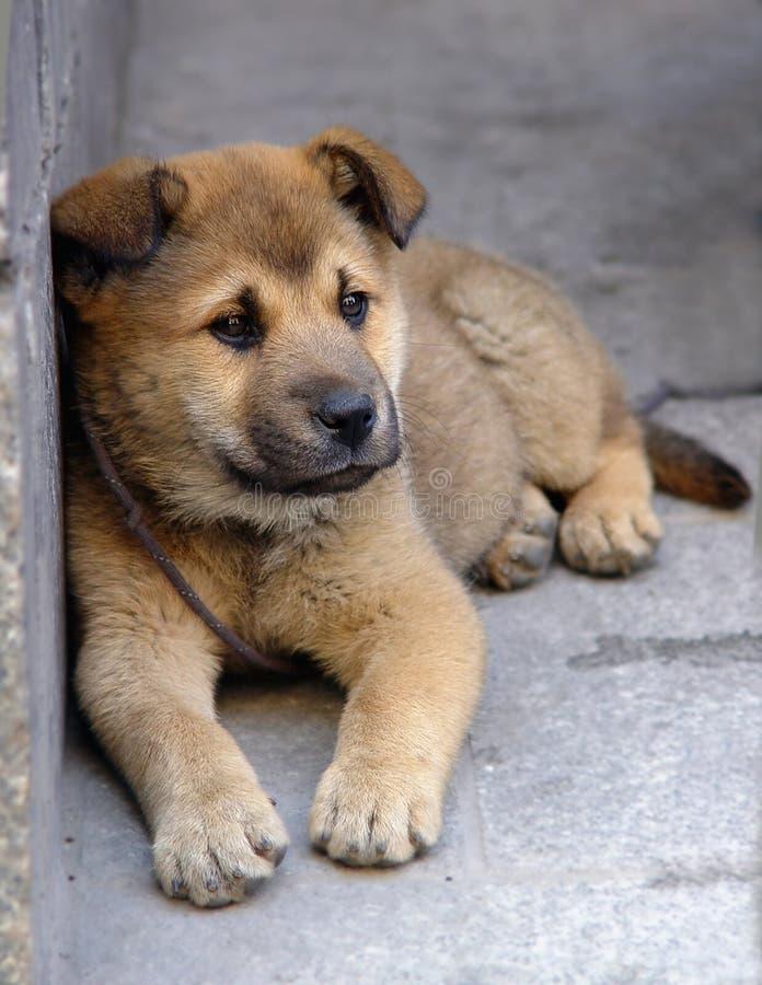 Filhote de cachorro só imagens de stock royalty free