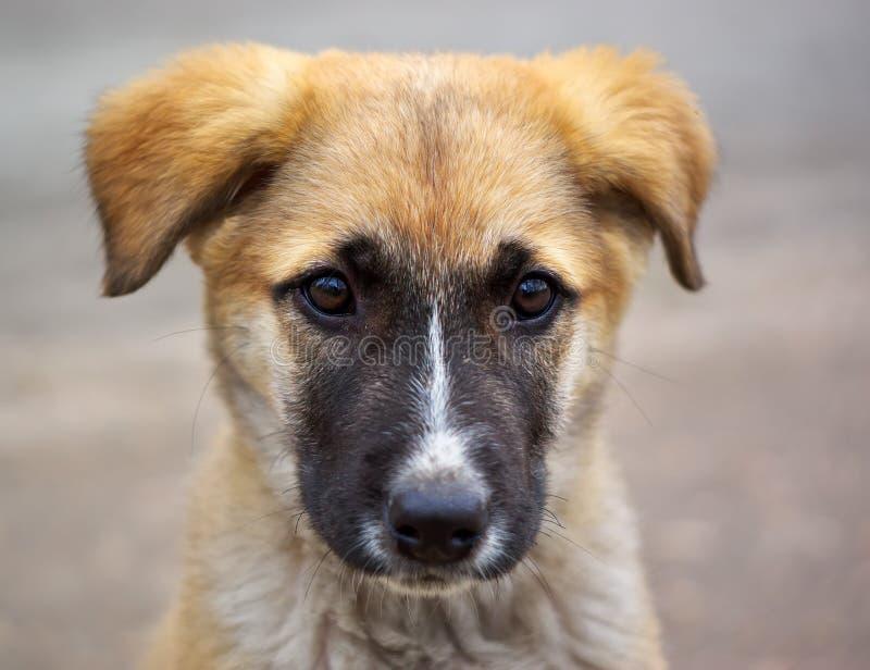 Filhote de cachorro triste fotos de stock