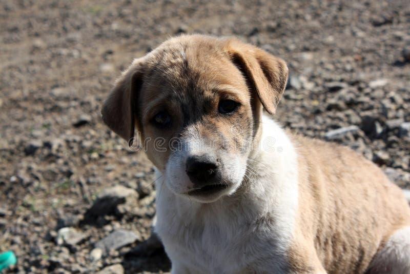 Filhote de cachorro triste da rua fotos de stock