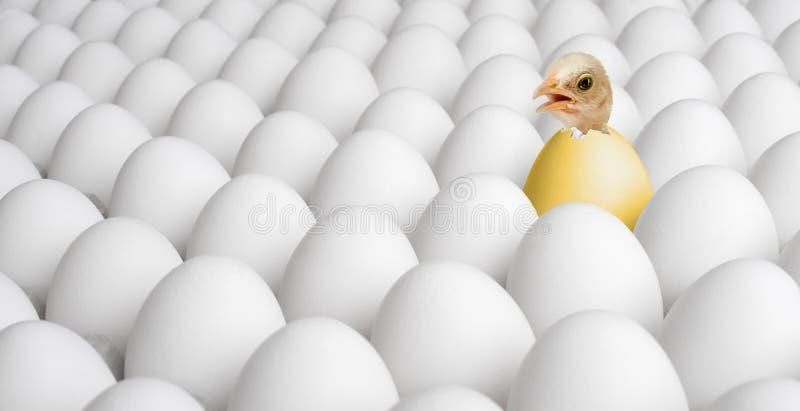 Filhote de passarinho da galinha foto de stock royalty free