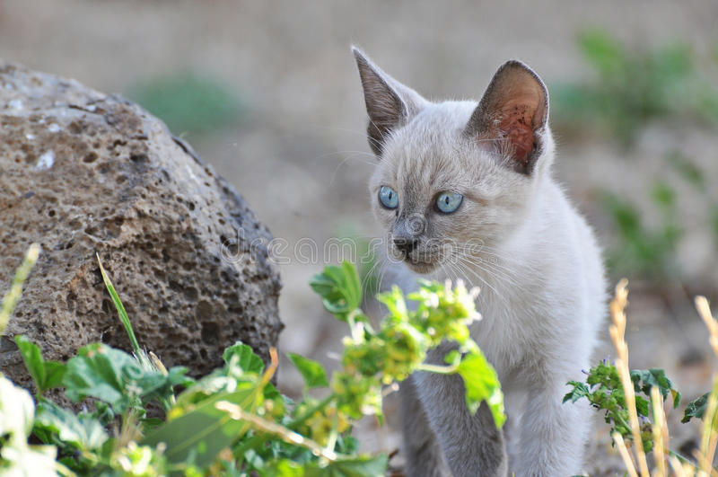 Filhote do gato foto de stock