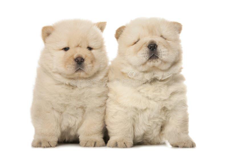 filhotes de cachorro da Comida-comida foto de stock