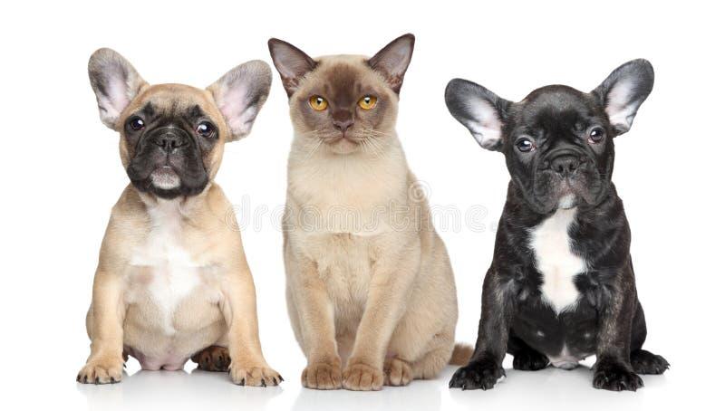 Filhotes de cachorro do gato e do cão em um fundo branco fotos de stock