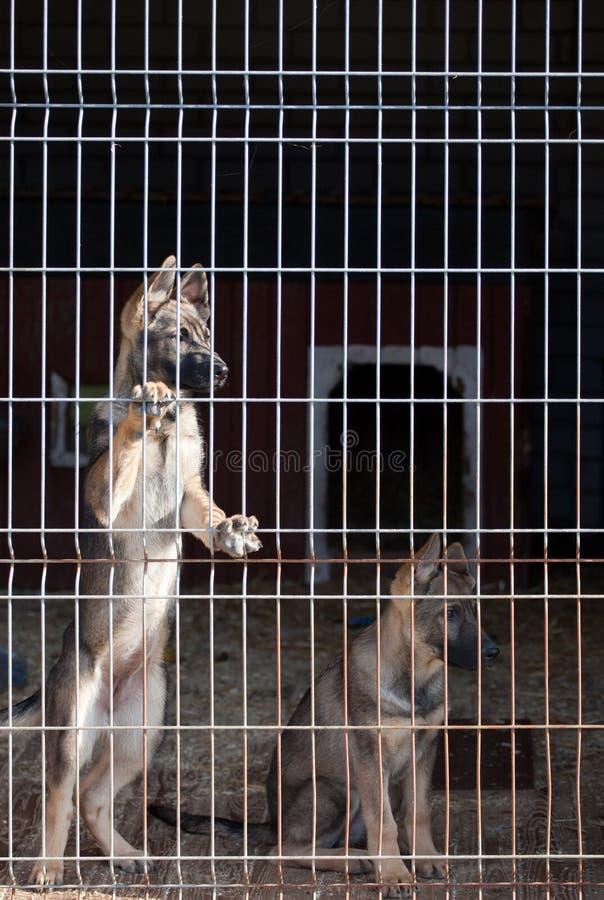 Filhotes de cachorro na libra de cão foto de stock royalty free