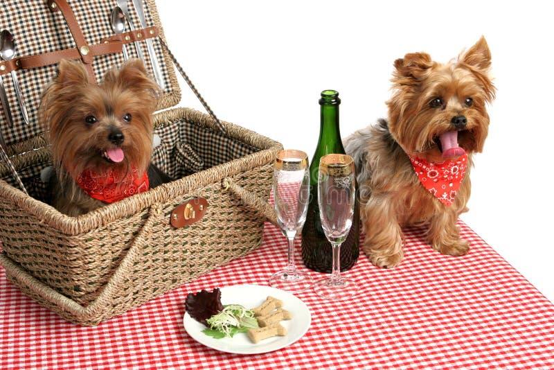 Filhotes de cachorro no piquenique foto de stock royalty free