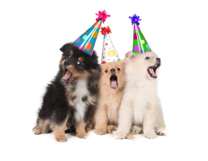 Filhotes de cachorro que cantam chapéus desgastando do partido do feliz aniversario imagens de stock