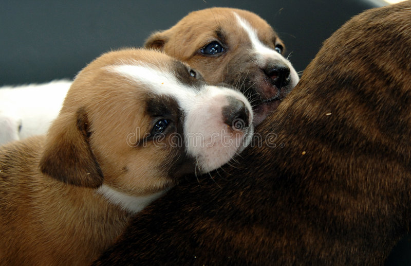 Filhotes de cachorro Snuggling fotos de stock royalty free