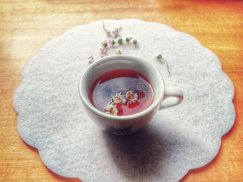 Fili?anka herbata z ?wie?ymi chamomile kwiatami obraz royalty free