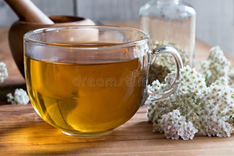 Filiżanka krwawnik herbata z krwawnikiem kwitnie w tle fotografia stock