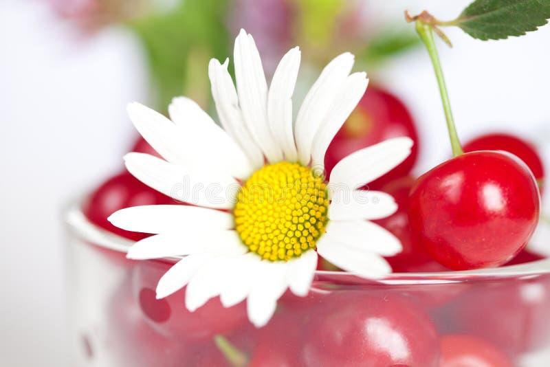 Filiżanka z wiśniami i chamomile zdjęcia stock