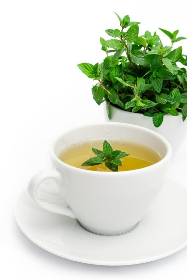 Filiżanka zielona herbata z mennicą, zakończenie, selekcyjna ostrość zdjęcia royalty free